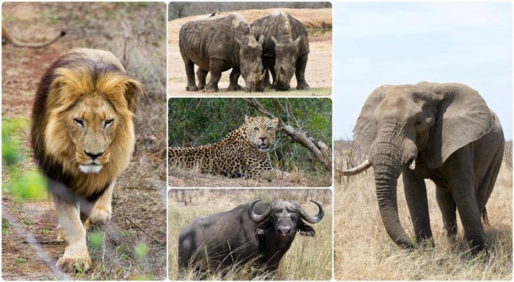 پنج جانور بزرگ آفریقای جنوبی