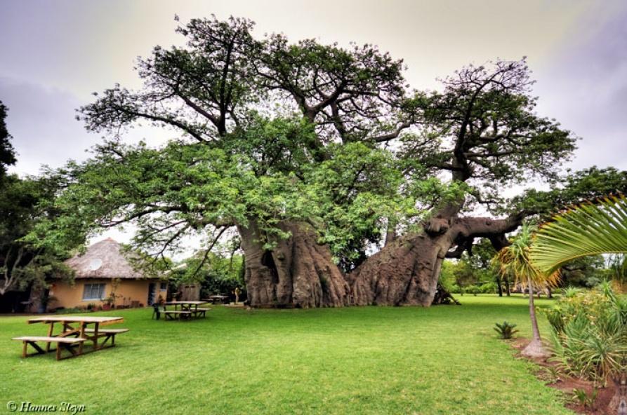 sunland-baobab-pub
