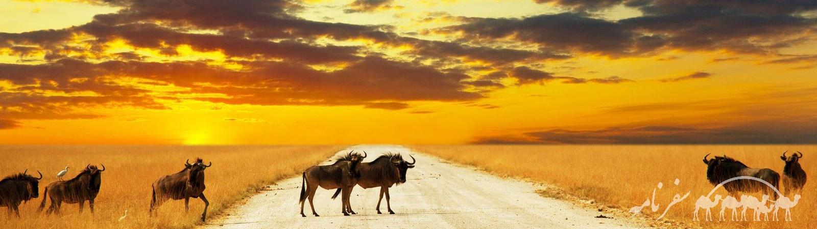 Background-South-Africa-tour