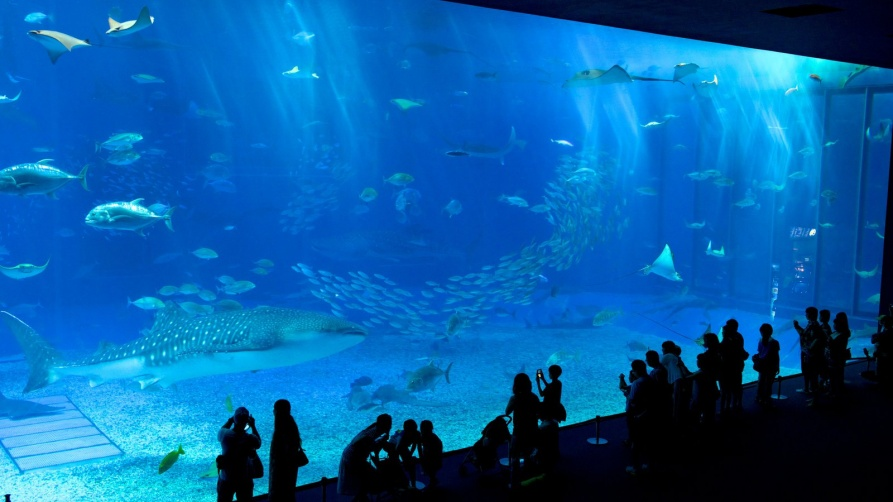 84438-Okinawa-Churaumi-Aquarium