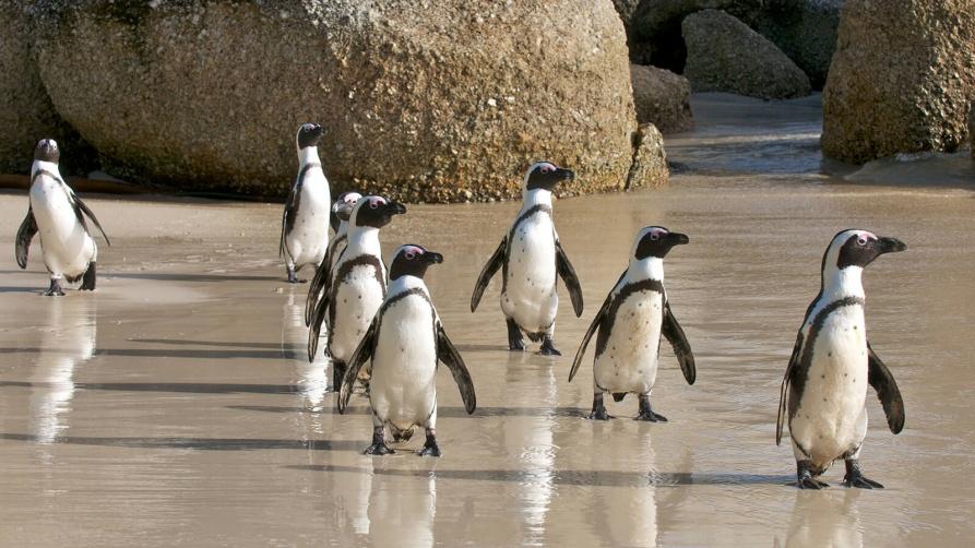 hero-penguins_0