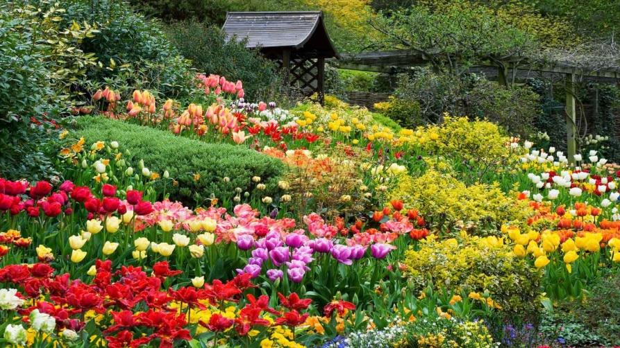 South-African-Botanical-Garden
