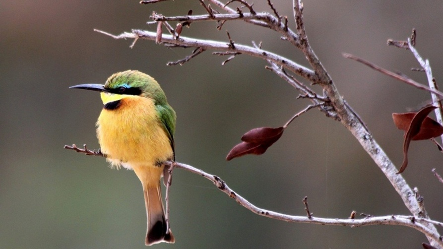 Popular areas in South Africa to see the birds