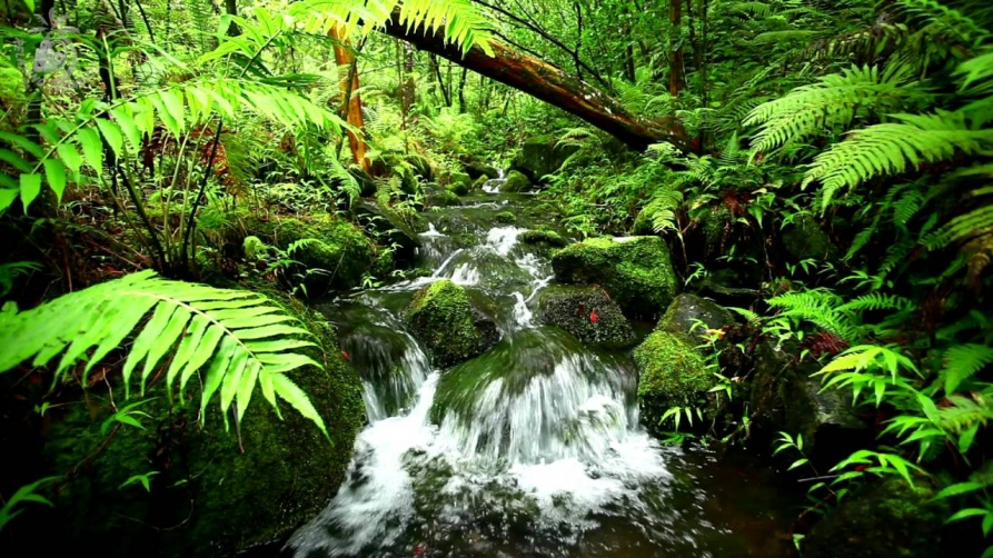 Do not miss the chance to see the oldest rain forests in the world