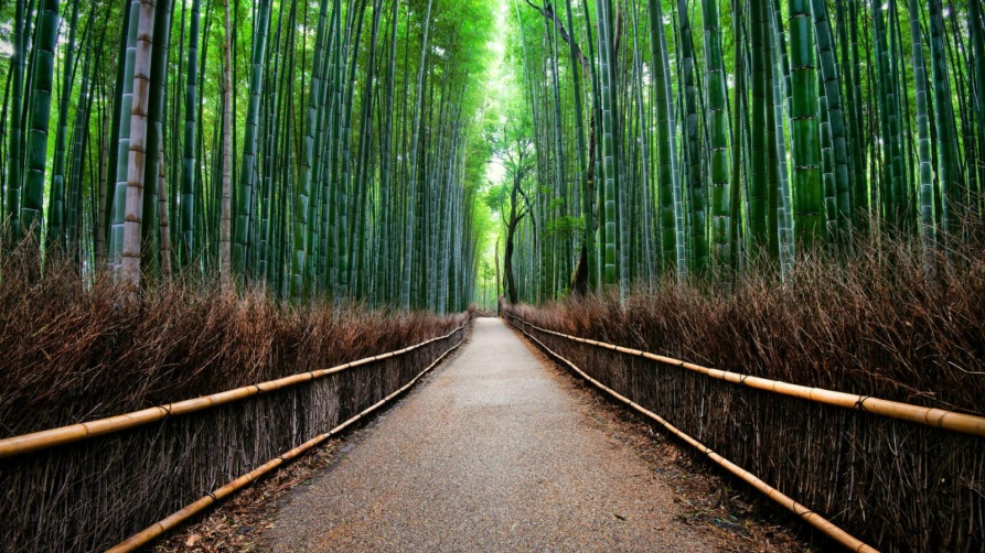Sagano Forest Bamboo is one of the most famous places in Japan with a pleasant sound1