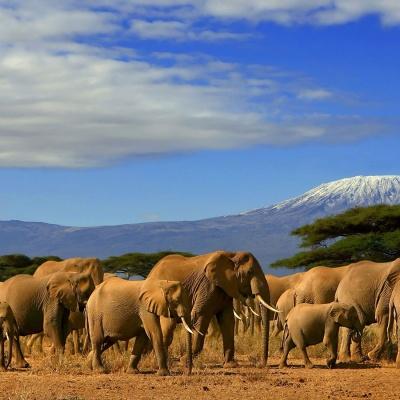 تور بزرگ کنیا