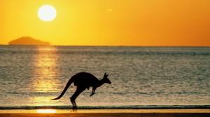 gallery-australia16