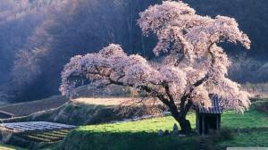 gallery-japan2