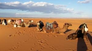 gallery-morocco4