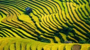 gallery-vietnam (2)